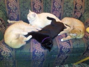 kitty buddies!