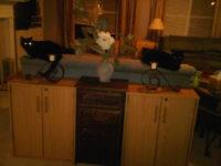 matching black cats
