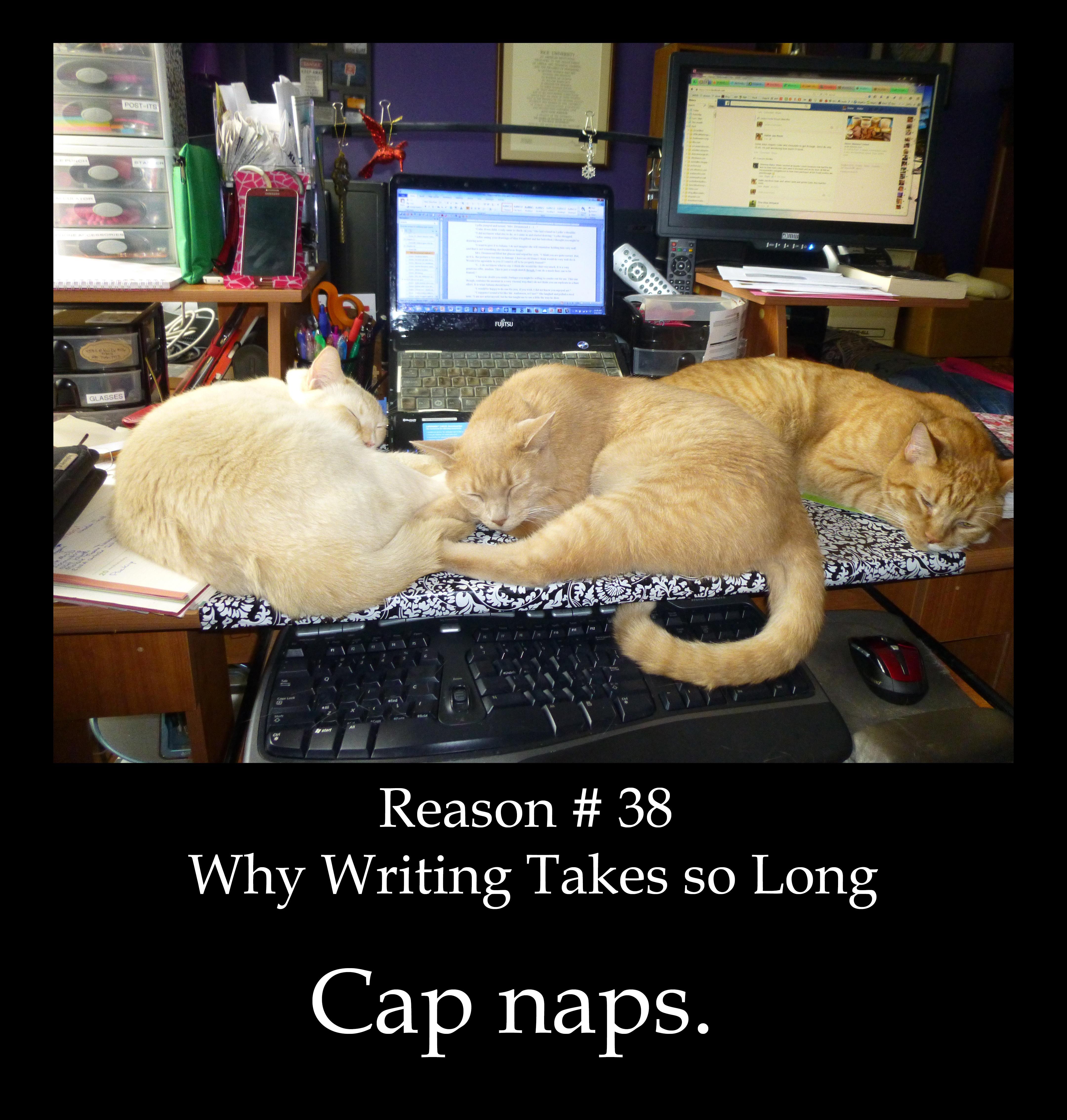 cat naps